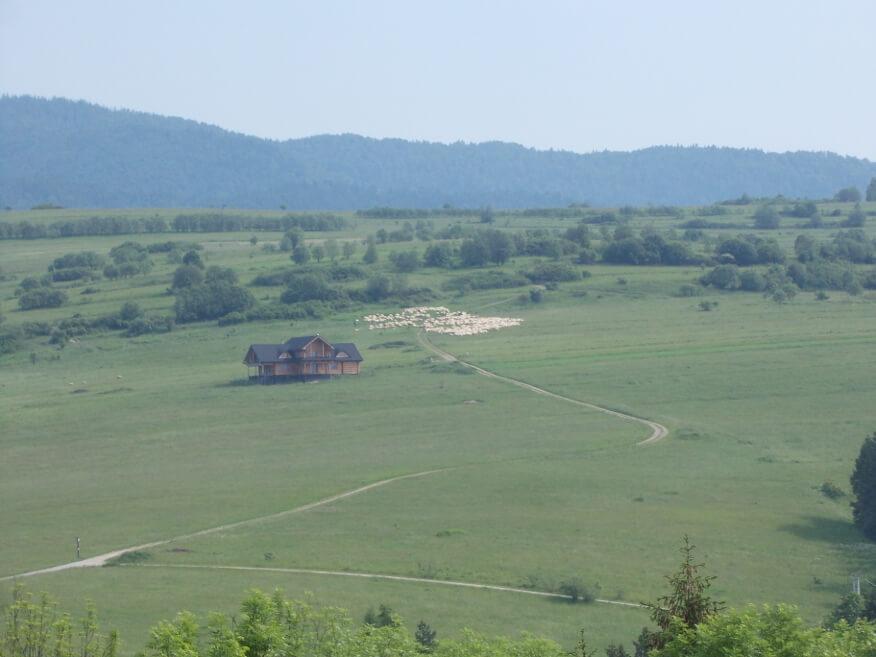 Stado owiec widziane z zamku w Czorsztynie