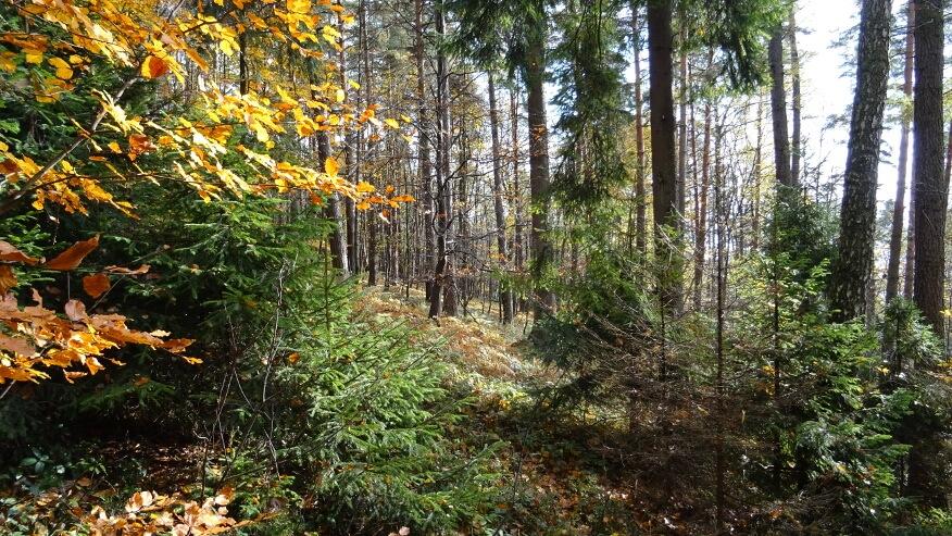 W lasach Beskidu Małego jesień już na całego