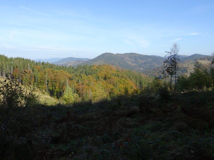 Prawdziwe kolory jesieni