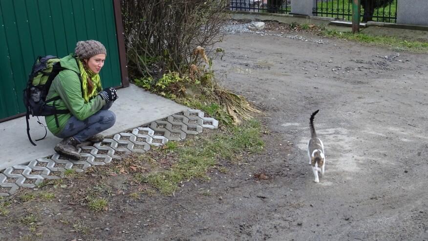 Asia i miauczący pcimski kot