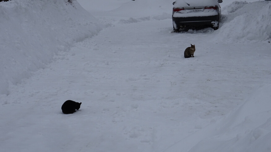 Wetlińskie koty