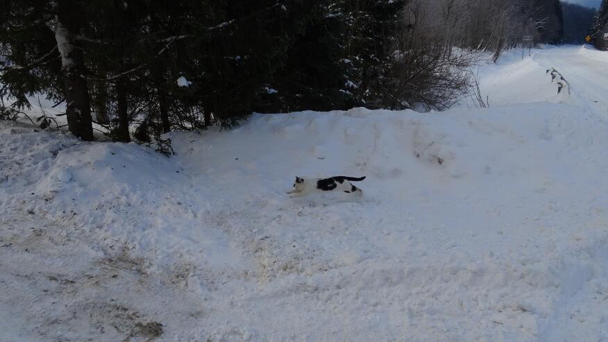Uciekający kot przed naszą kwaterą
