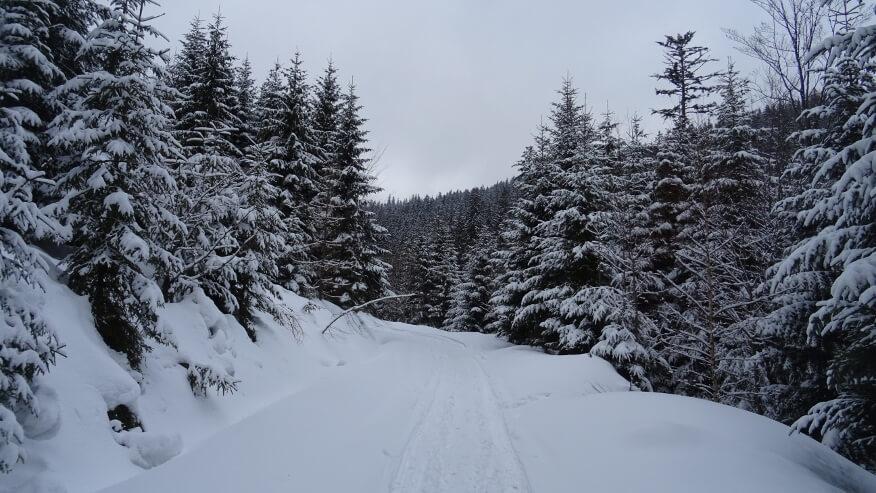 Na drodze leśnej do Sopotni