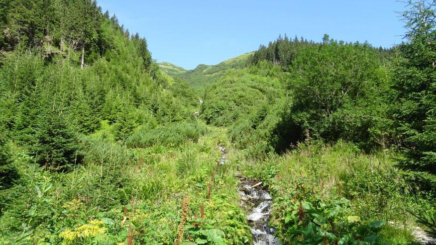 Bujna roślinność i potoki przecinające szlak na Jamnicką Przełęcz