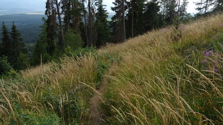 Zejście szlakiem pomiędzy trawami i malinami