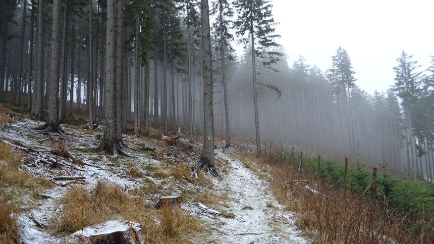 Szlak w kierunku Czarnej Góry