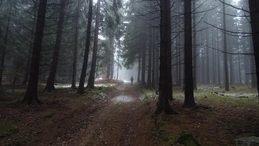 Idziemy przez ciemny, zamglony las