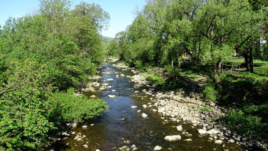 Rzeka Ostrawica w Ostrawicy