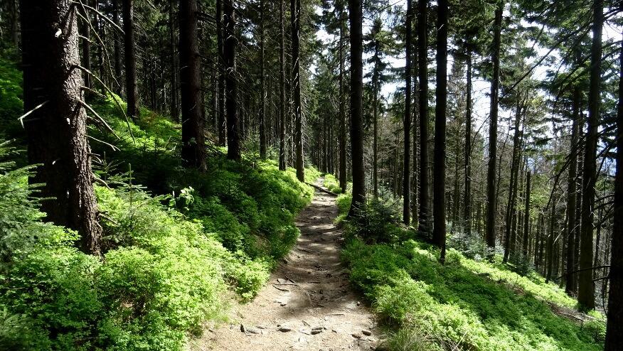 Szlak zejściowy z Łysej Góry