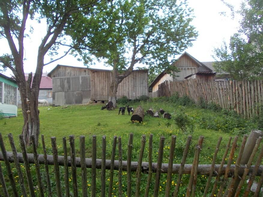 Kózki w Libuchorze