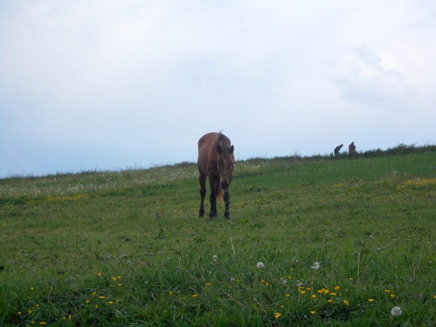 Na pierwszym planie rozdrażniony koń a w tle pracujący w polu mieszkańcy wsi