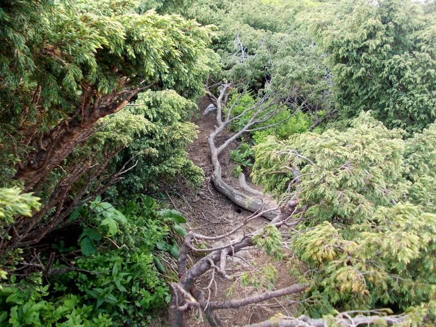Ostra, kłująca roślinność pod szczytem Pikuja