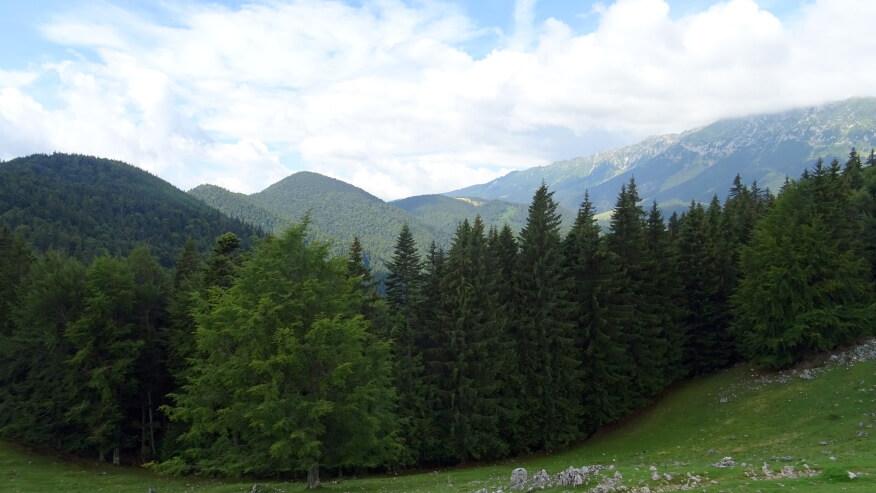 Widoki z polany Zănoaga