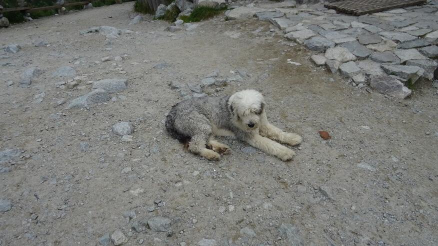 Ogolony schroniskowy pies