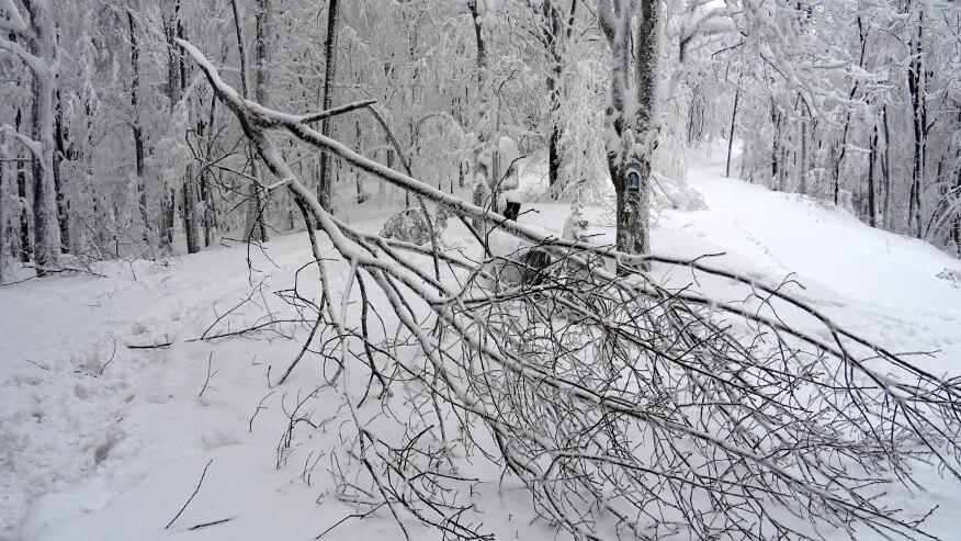 Złamane drzewo na Przełęczy U Panienki