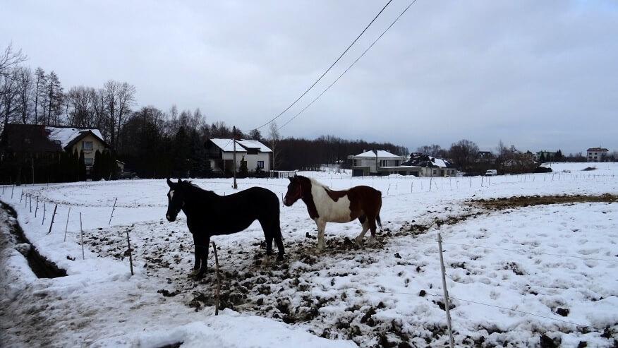 Koziańskie konie