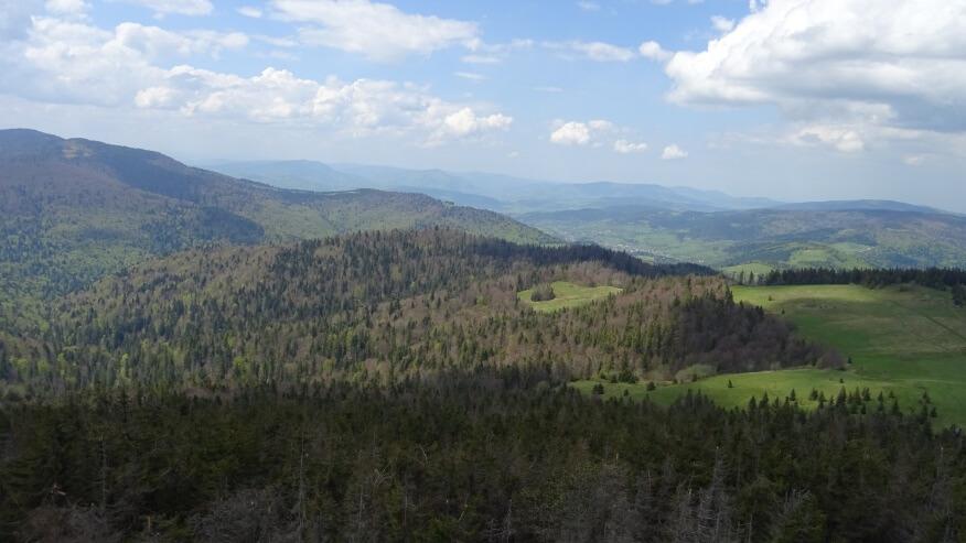 Widok z wieży na północ