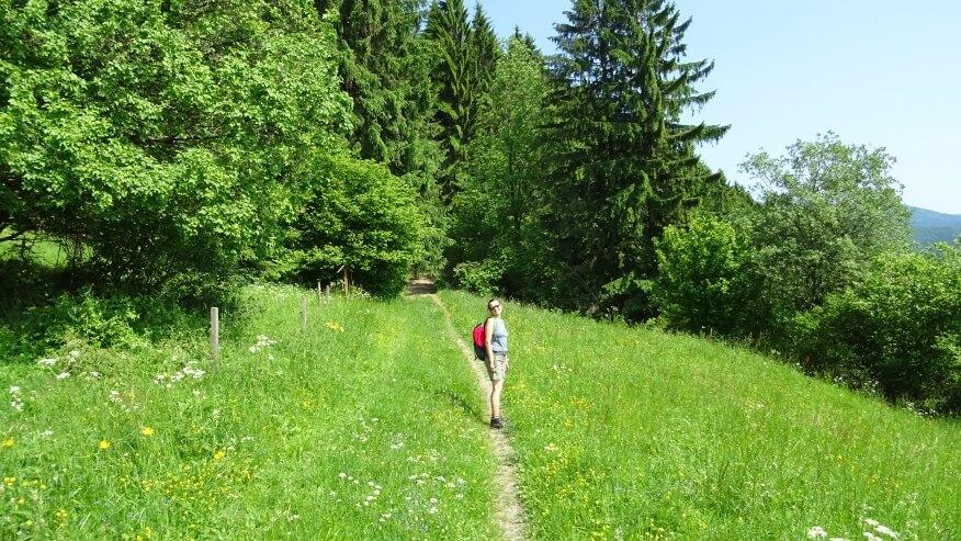 Wreszcie las na szlaku