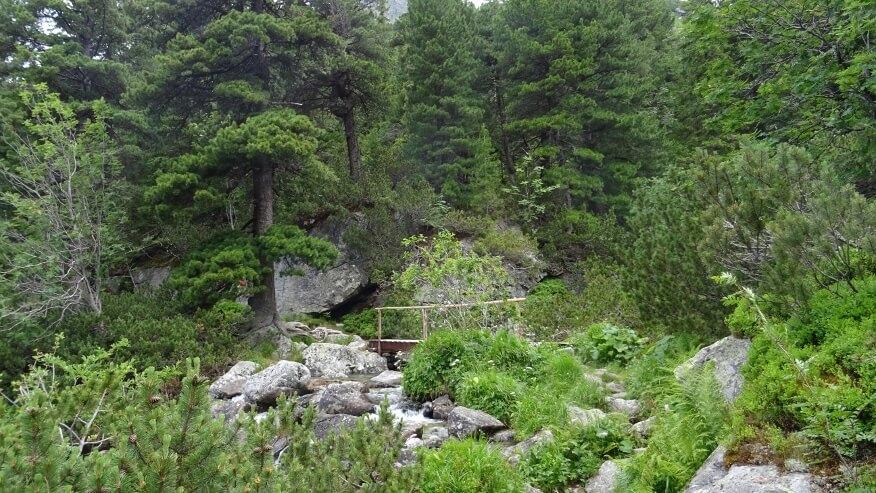 Mostek nad Zmarzłym Potokiem