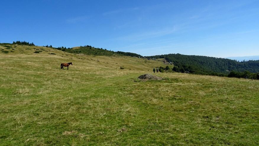 Koń przy szlaku