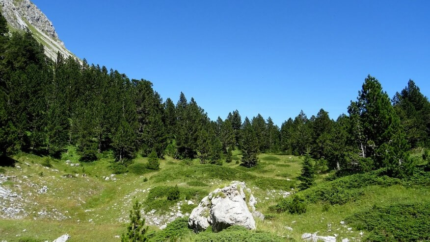 Zielony, kraterowy teren