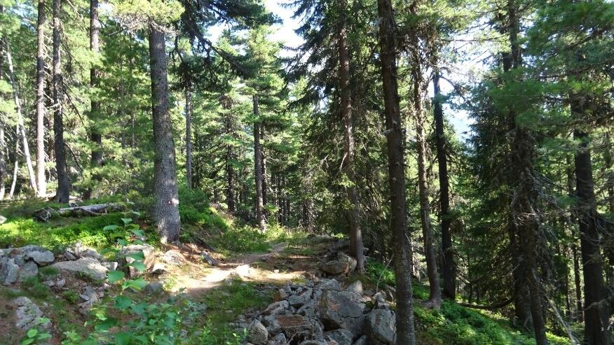 Przyjemna leśna dróżka prowadząca nad Hridsko Jezero
