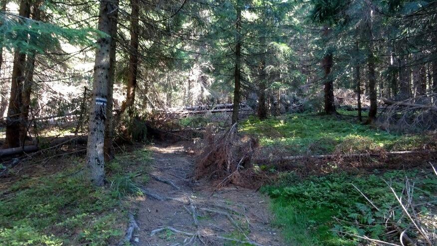 Powalone drzewa w drodze na Paracza