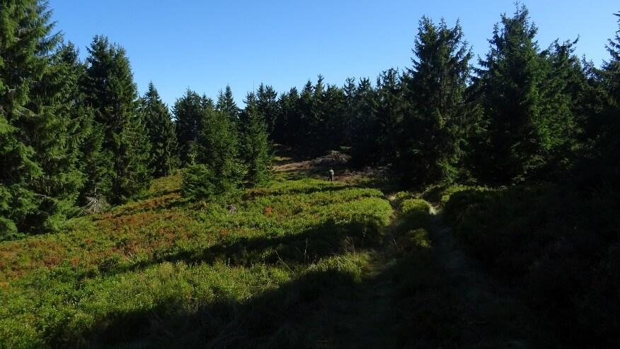 Borówkowy szlak w kierunku Príslopca