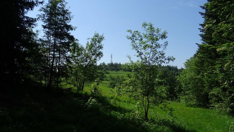 Koskowa Góra z niebieskiego szlaku
