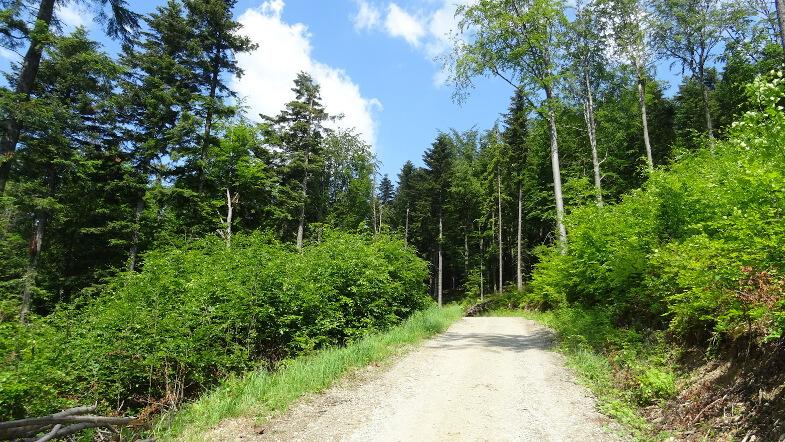 Na leśnej drodze