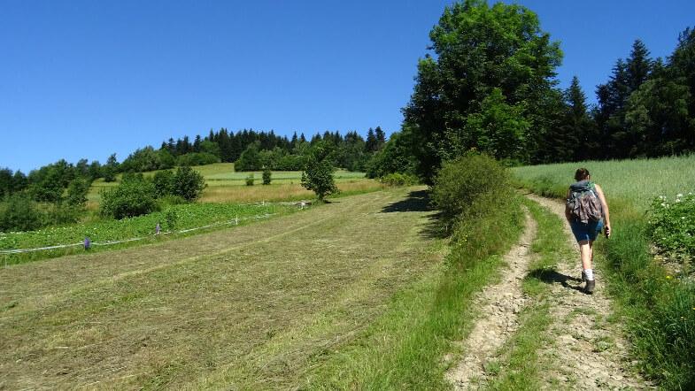 Łąkowe podejście na Wierzbanowską Górę