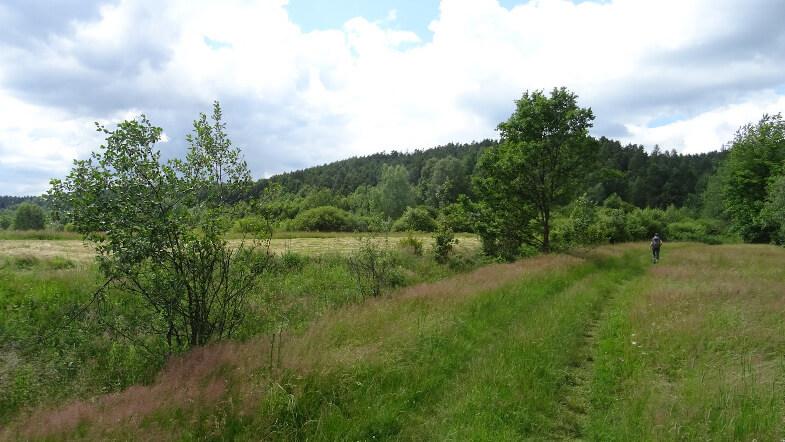 Łąki w drodze na Leskowiec