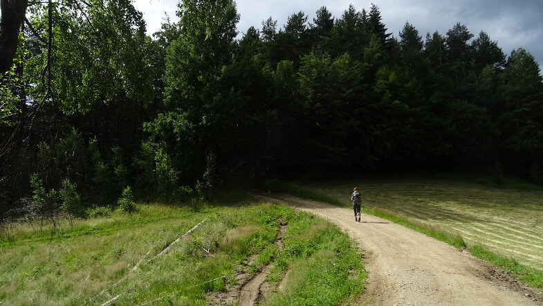 Wejście do ciemnego lasu