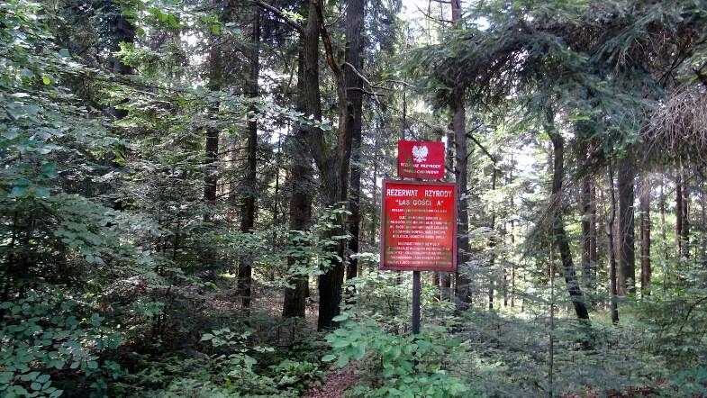 Rezerwat przyrody Las Gościbia