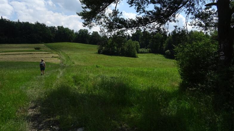 Szlakowe łąki