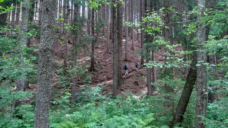 Na leśnej ścieżce dydaktycznej PILSKO