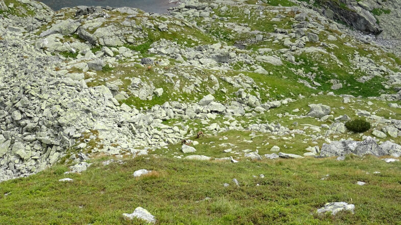 Kozice w Wołowej Kotlince