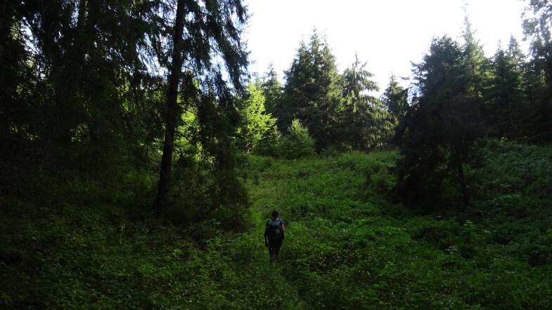 Na dzikim, zielonym szlaku